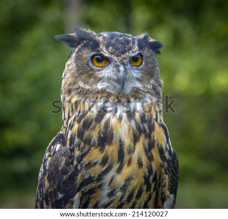 Eagle Owl close up portrait against a blurred green - stock photo