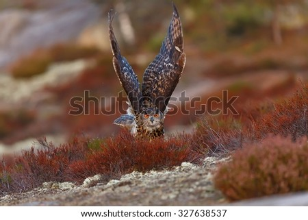 eagle owl is starting - stock photo