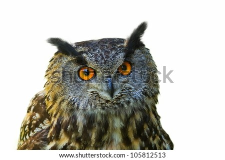 eagle owl separated - stock photo