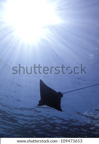Eagle ray silhouette with sun - stock photo