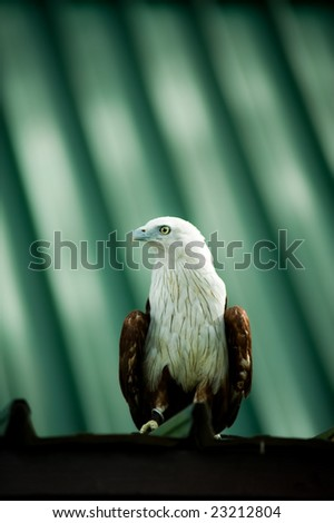 eagle sitting on a roof - stock photo