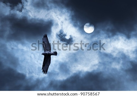 Eagle soars in the sky. The bird of prey soaring in the stormy sky - stock photo
