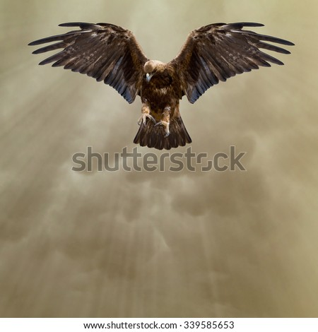 eagle with spread wings in the dark sky - stock photo