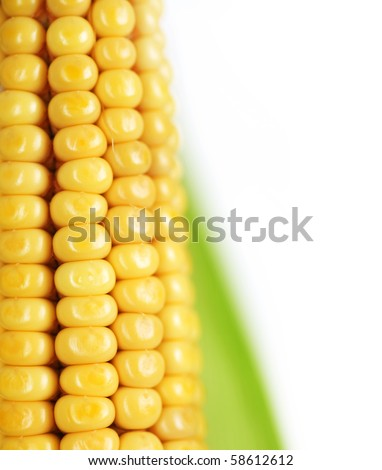 Ear of Sweet Corn closeup - stock photo