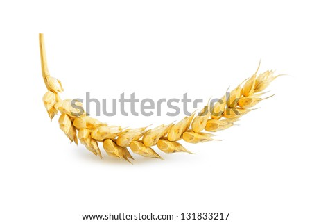 ear of wheat isolated - stock photo