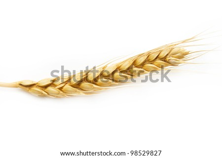 ear of wheat on a white background - stock photo