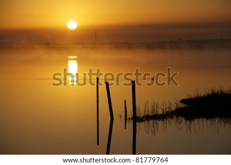 early fog - stock photo