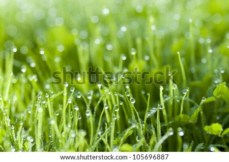 Early morning dew on fresh green grass - stock photo