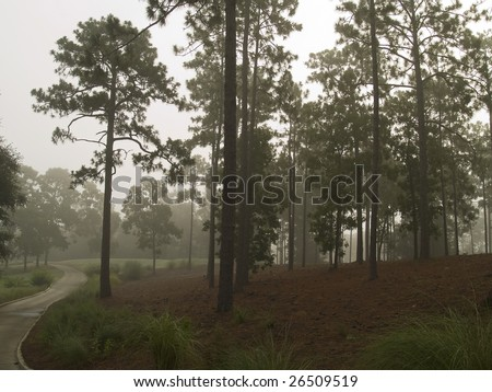 Early morning fog on the edge of this beautiful golf course in South Carolina. - stock photo