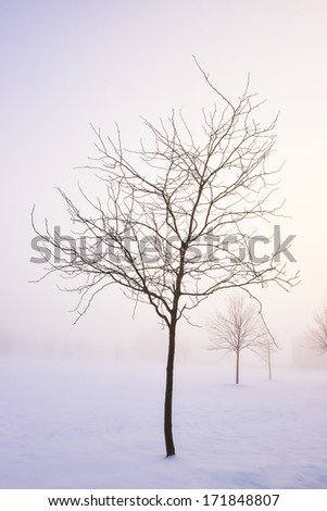 Early Morning Foggy Winter Scene - stock photo