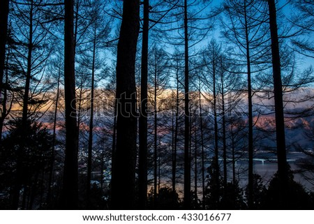 Early morning forest in Kawaguchiko Japan. - stock photo