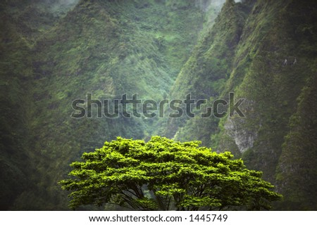 Early morning in the jungle (Oahu) - stock photo