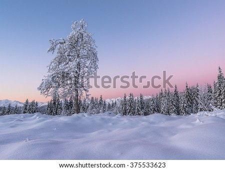 Early morning in the winter forest with blue and purple tones - stock photo