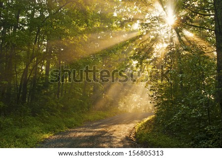 Early morning light as sunrays shine through the trees. - stock photo
