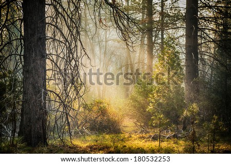 Early morning light in Mariposa, Yosemite National Park, California, USA. HDR Processing. - stock photo