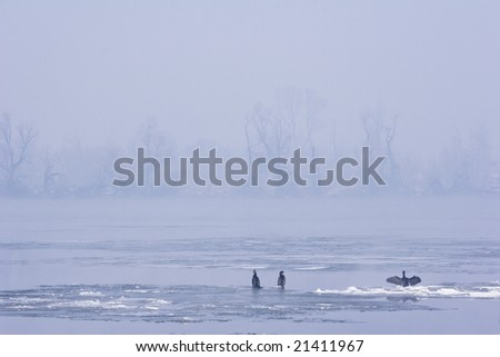 early morning misty view of river Danube mid in winter - stock photo