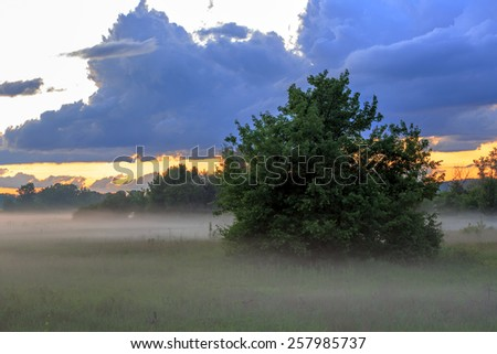 Early morning on meadow in steppe - stock photo