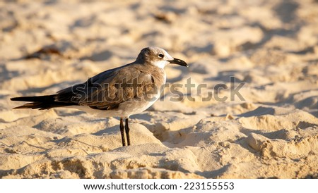 Early morning on sandy beach with a portrait of a seagull - stock photo