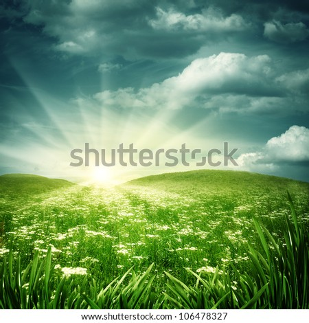 Early morning on the daisy meadow, natural backgrounds - stock photo