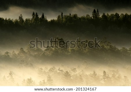 Early summer morning in Torronsuo National Park, Tammela, Southern Finland.  - stock photo