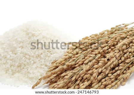 Ears of rice with white rice on white background - stock photo