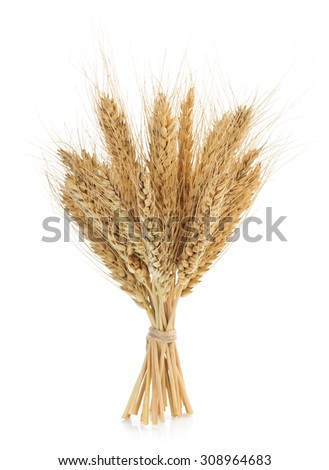 ears of wheat isolated on white background - stock photo