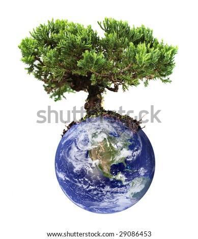 Earth tree - stock photo