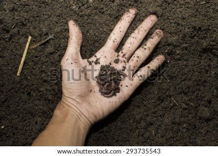 earthworms on hand - stock photo