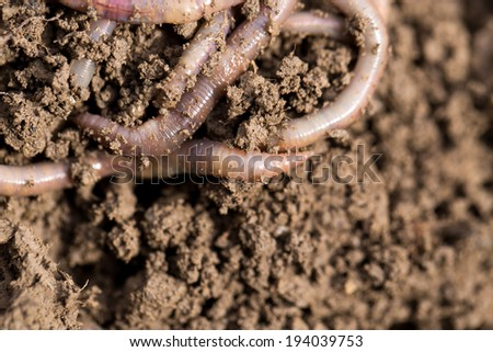earthworms on soil. macro - stock photo