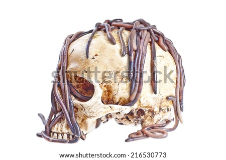 Earthworms on the skull - stock photo