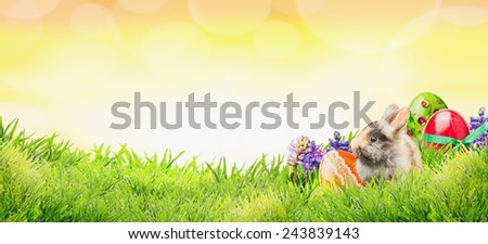 Easter background with bunny, eggs and flowers on grass and sunny sky with bokeh, banner for website - stock photo