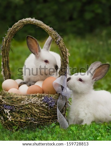 Easter basket with eggs and the Easter bunny  - stock photo