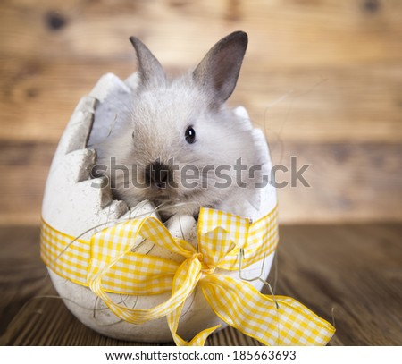 Easter bunny in the egg,  - stock photo