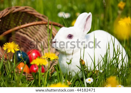 Easter bunny on a beautiful spring meadow with dandelions in front of a basket with Easter eggs - stock photo