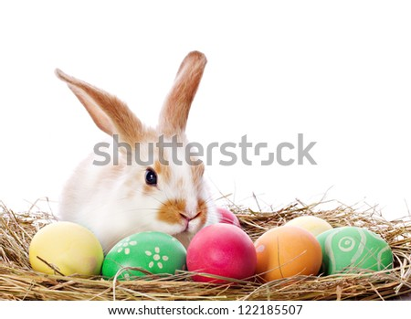 Easter bunny sitting among multicolored eggs isolated on white - stock photo