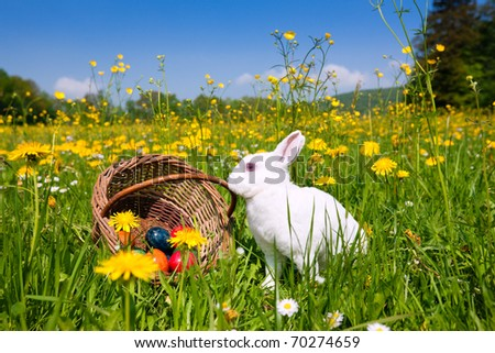 Easter bunny with eggs on a meadow in spring - stock photo