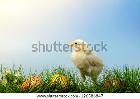 Easter chick with colorful painted Easter egg, on blue sky background - stock photo