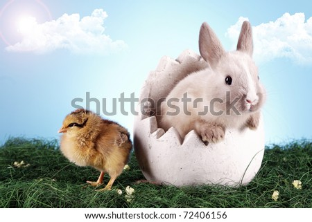 Easter Chicken and bunny rabbit! - stock photo