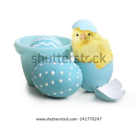 Easter colorful eggs and cute little chicken isolated on white background - stock photo