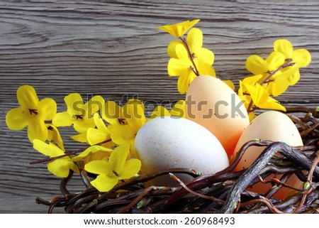 Easter decoration / cards - easter eggs with Laburnum in a nest made of wicker with wooden background - space for text - stock photo