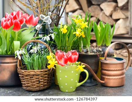 easter decoration with spring flowers. tulips, snowdrops and narcissus blooms - stock photo