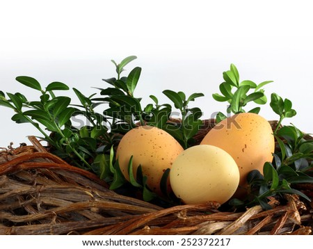 Easter decorations / cards - easter eggs with boxwood in a nest made of rattan on a light background  - stock photo