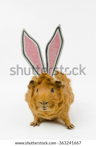 easter disguise - stock photo