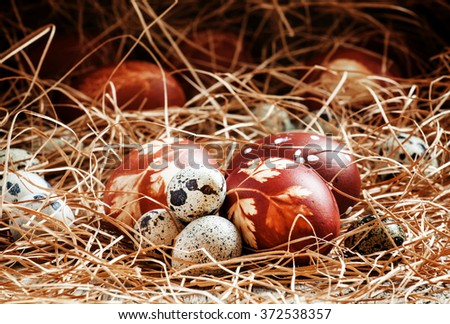 Easter eggs, dyed boiled onion skins with a pattern of herbs and quail eggs in hay on the old wooden background in rustic style, selective focus - stock photo