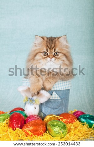 Easter Golden Chinchilla Persian kitten sitting inside denim container with easter eggs and easter bunny on light blue green background  - stock photo