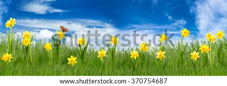 easter meadow with daffodils in front of blue sky - stock photo