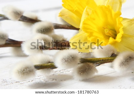 easter narcissus and pussy willows - stock photo
