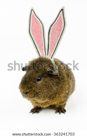 easter pig - stock photo