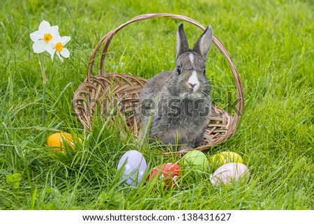 easter rabbit and easter eggs in green grass - stock photo