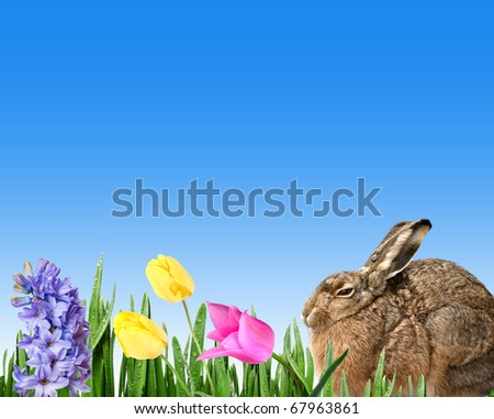 easter rabbit and spring flowers - stock photo